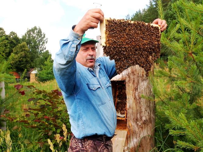 pažintinė bitininkystės programa